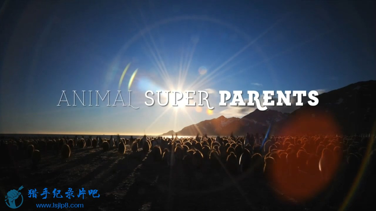 BBC.Animal.Super.Parents.Series.1.1of3.Going.It.Alone.720p.HDTV.x264.AAC.MVGroup.jpg