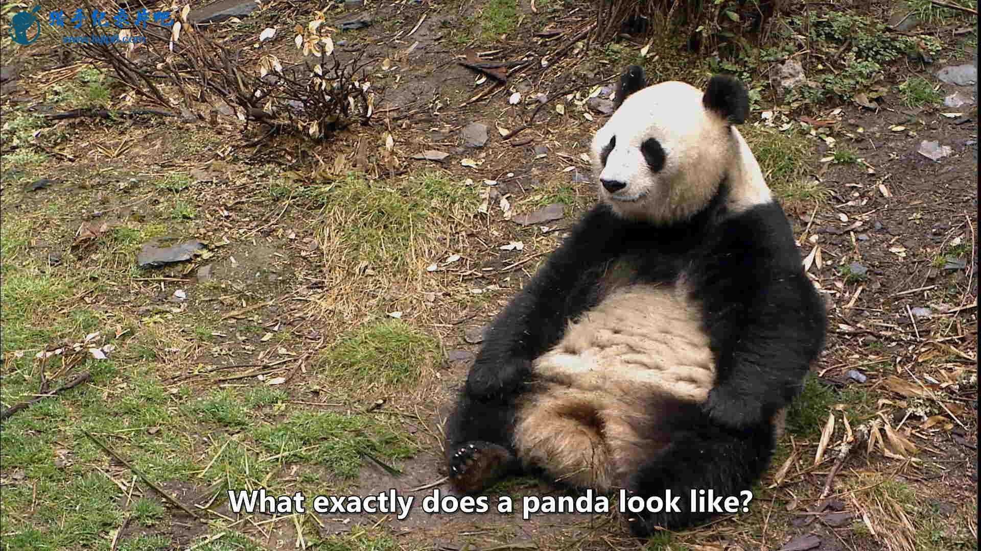 The Land of Abundance, The Legend of Pandas.mkv_20200609_112744.679_看图王.jpg