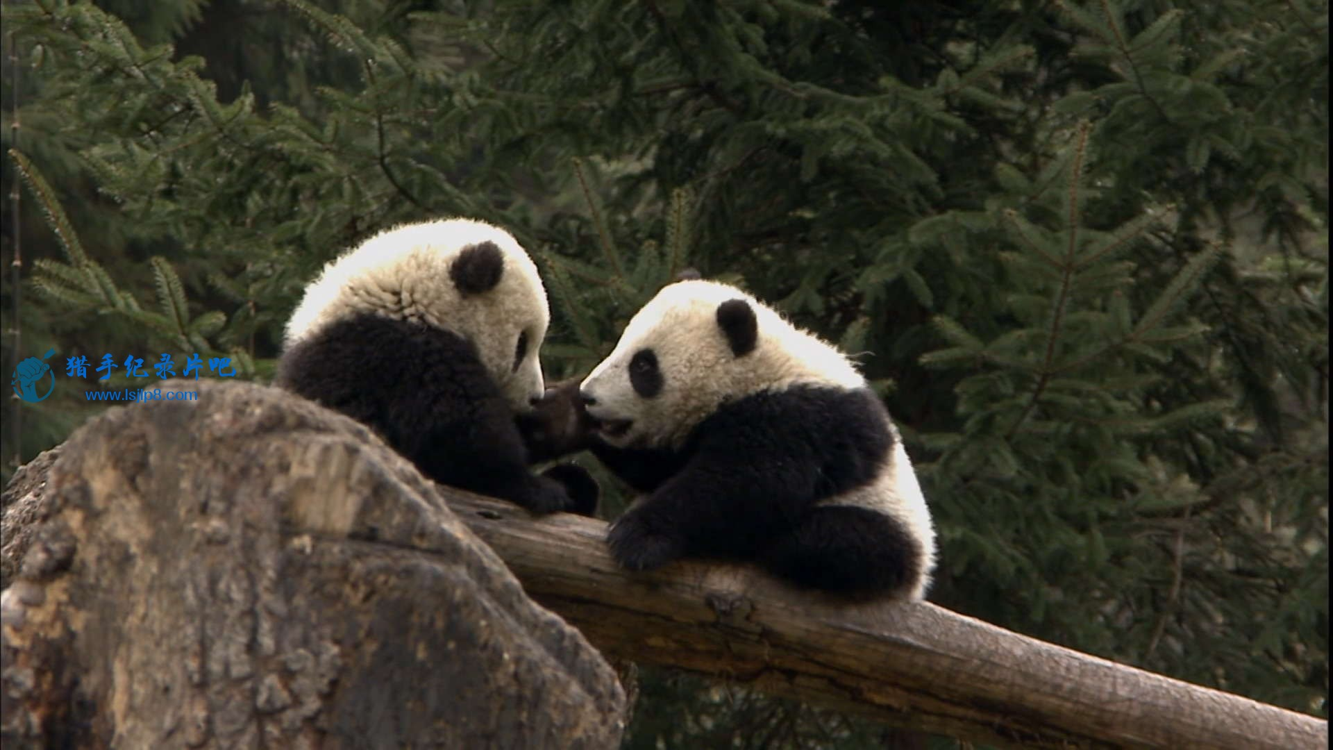 The Land of Abundance, The Legend of Pandas.mkv_20200609_112803.204_看图王.jpg
