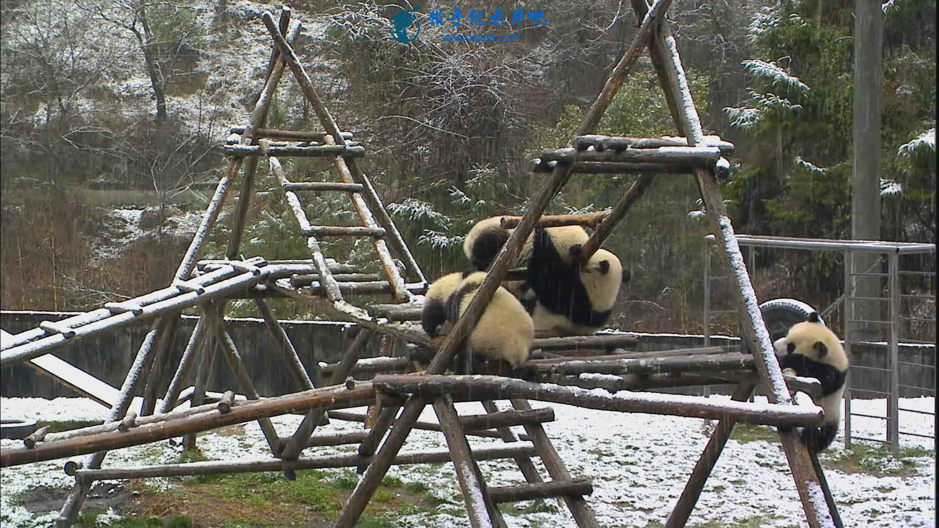 The Land of Abundance, The Legend of Pandas.mkv_20200609_112815.965_看图王.jpg