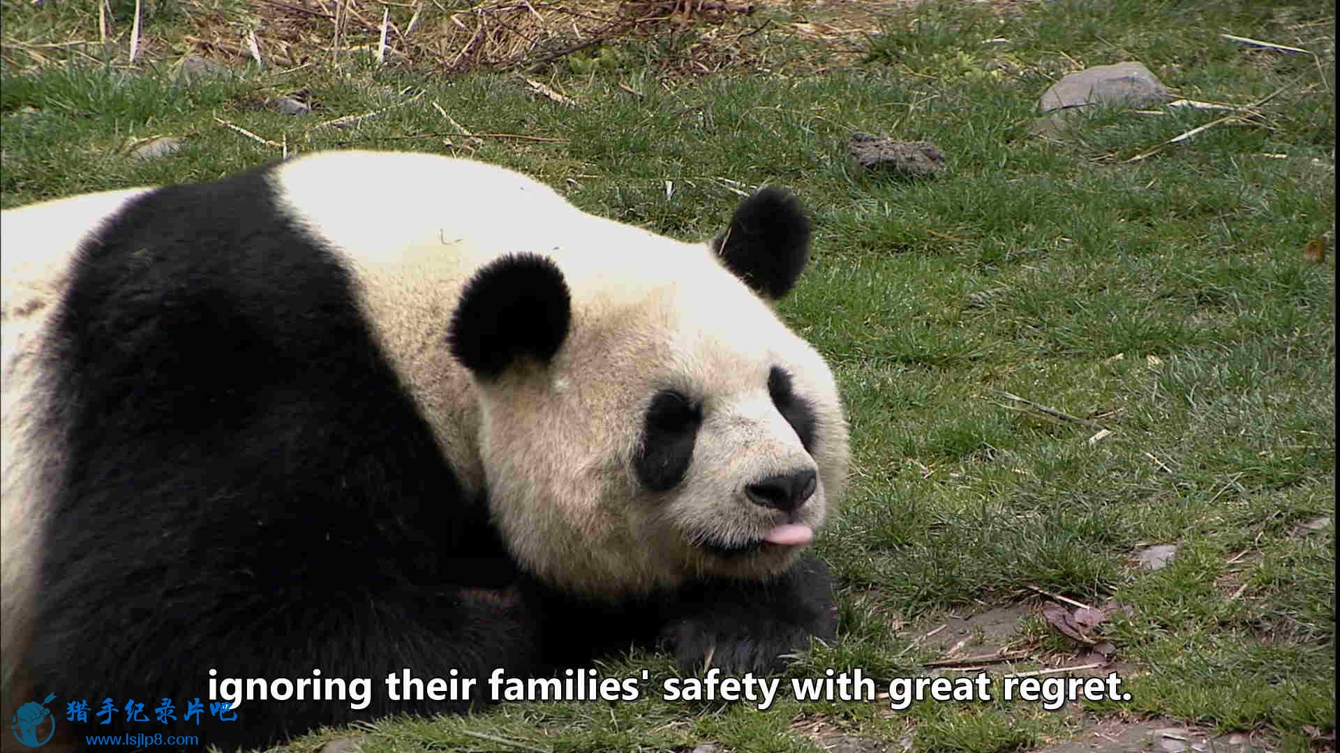 The Land of Abundance, The Legend of Pandas.mkv_20200609_112821.422_看图王.jpg