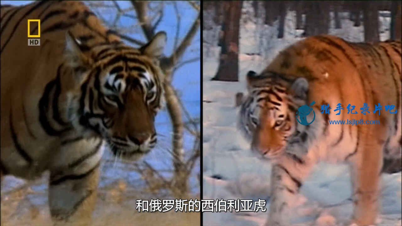 [国家地理.世界致命动物.亚太].National.Geographic.Deadly.Animals.Asia.Pacific.720.jpg