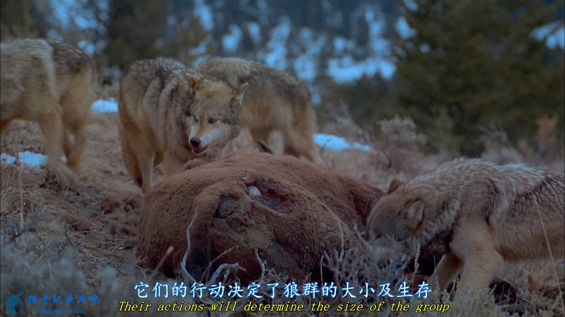 IMAX - Wolves.2001.1080p.BluRay.x264-CtrlHD.mkv_20200626_191107.083_看图王.jpg
