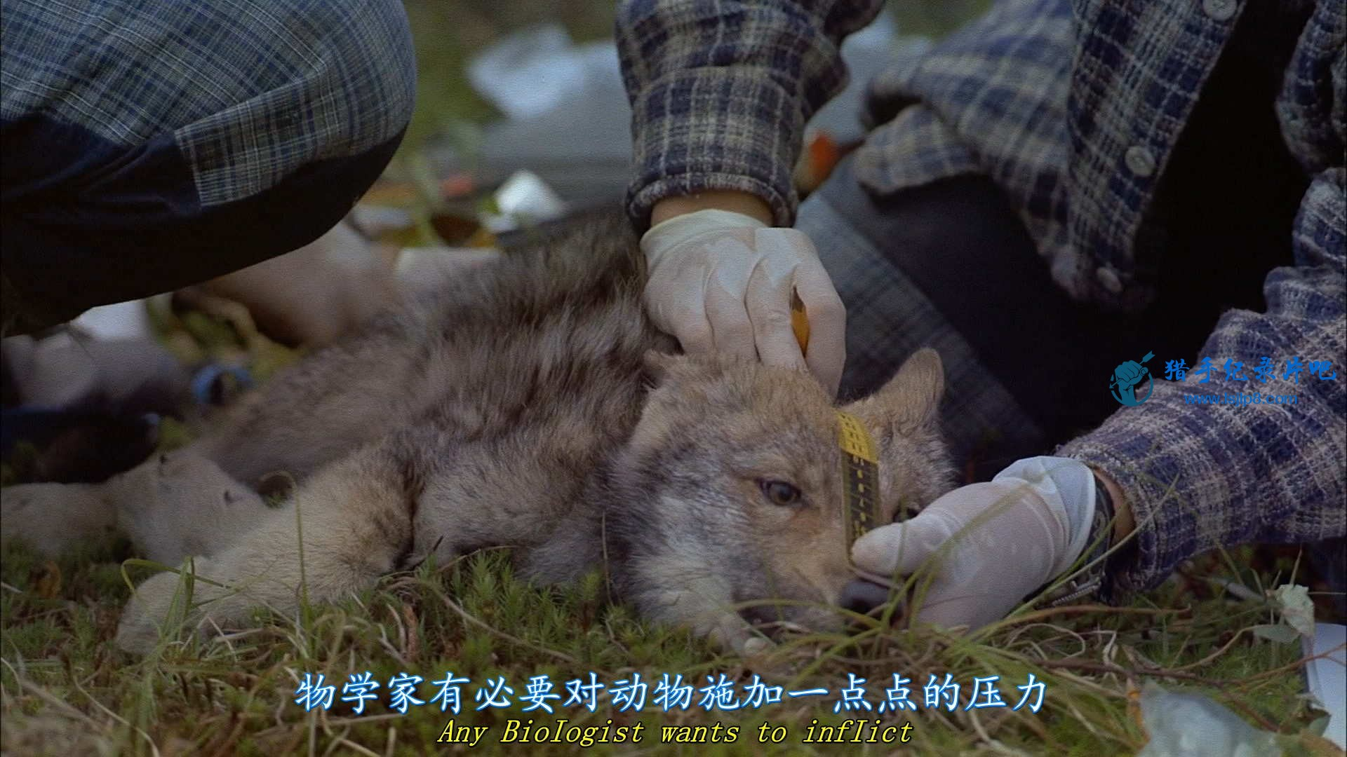 IMAX - Wolves.2001.1080p.BluRay.x264-CtrlHD.mkv_20200626_191251.873_看图王.jpg