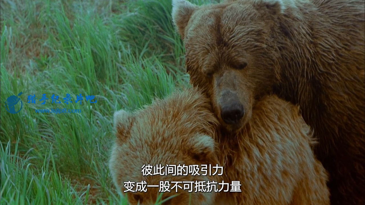 chd-imax-bears-ac3-bdrip.mkv_20200630_101121.757_看图王.jpg