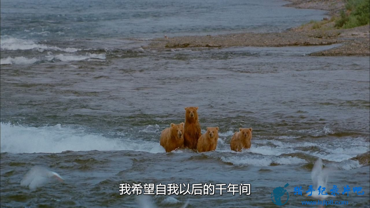 chd-imax-bears-ac3-bdrip.mkv_20200630_101328.165_看图王.jpg